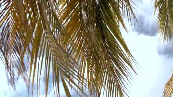 Palm leafs on a windy day with blue sky