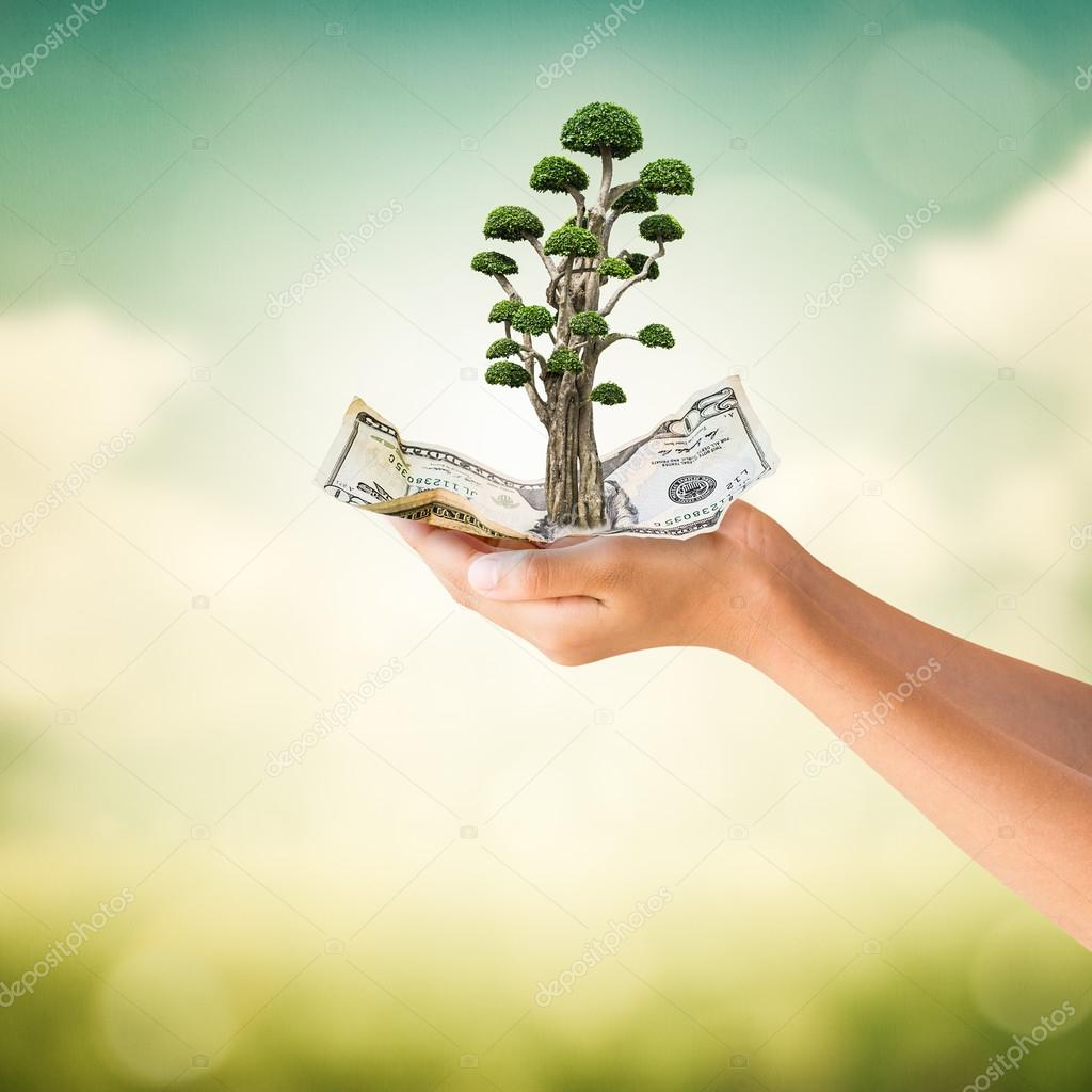 Hands holding US Dollars note with bonsai tree