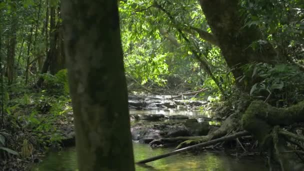 Procházka džunglí s krásnou scenérií bujných listnatých rostlin v létě. Malý vodní proud tekoucí po skalách za slunečního světla. Klidná scéna v tropickém lese.