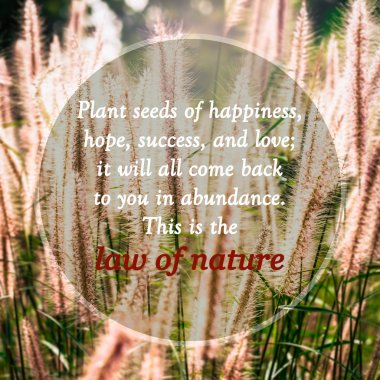 Meaningful quotes on grass flowers in meadow under sunlight