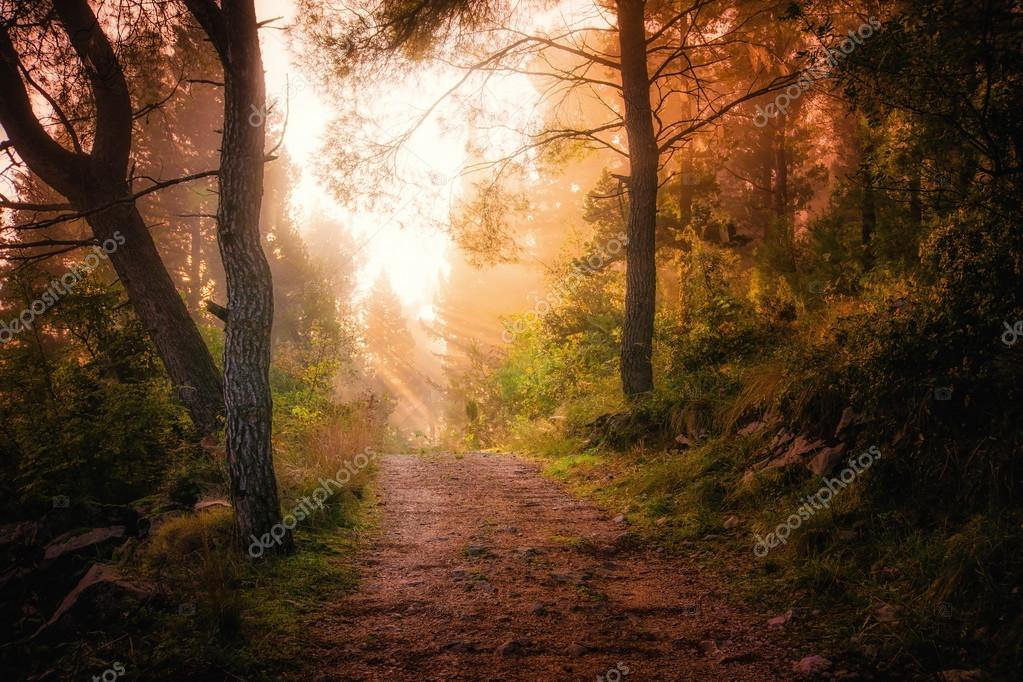 Path through the woods and light rays as they break through morn