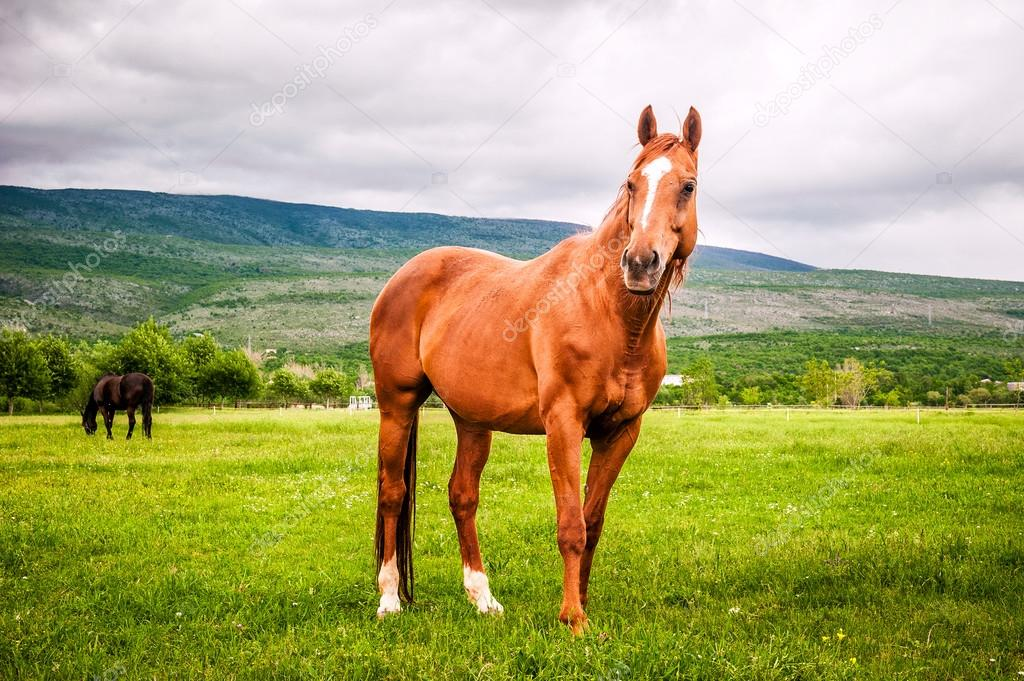 Powerful beautiful horse standing on the field