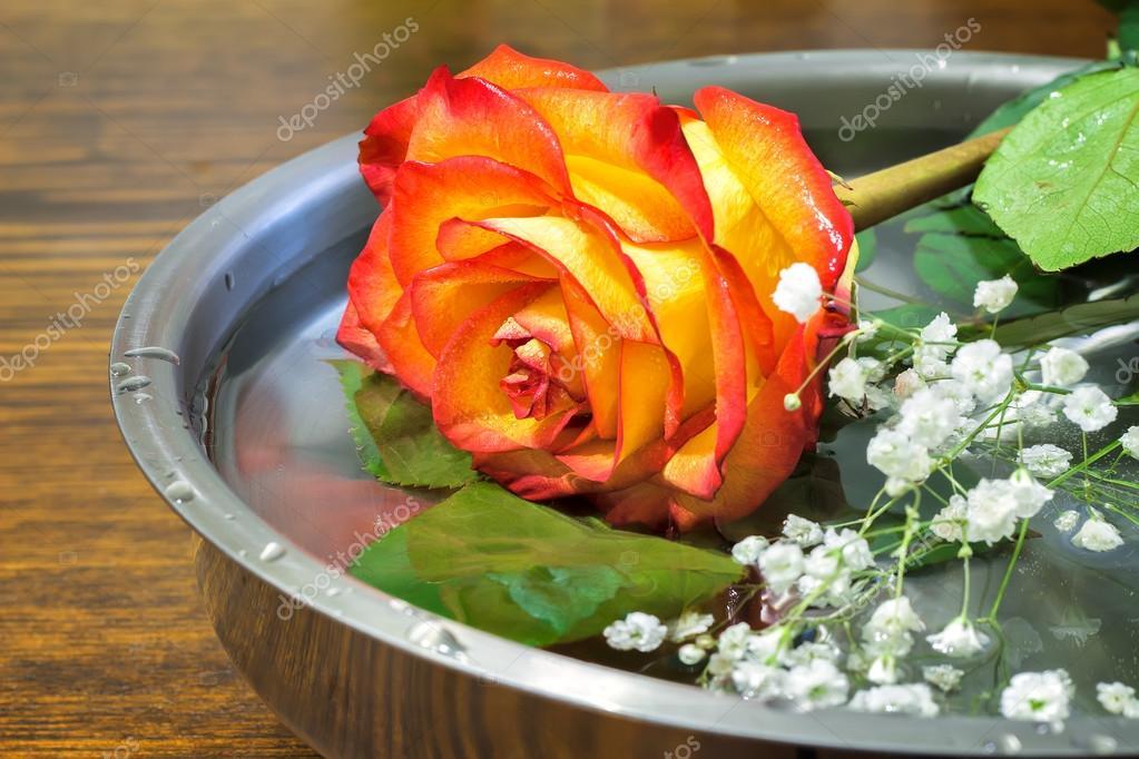 Wunderschöne Rose auf der Oberfläche des Schiffes mit Wasser ...