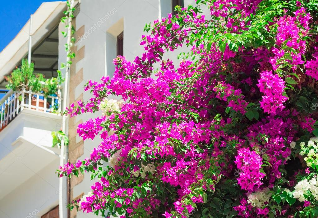 Building facade fragment with beautiful flowers on a balcony.
