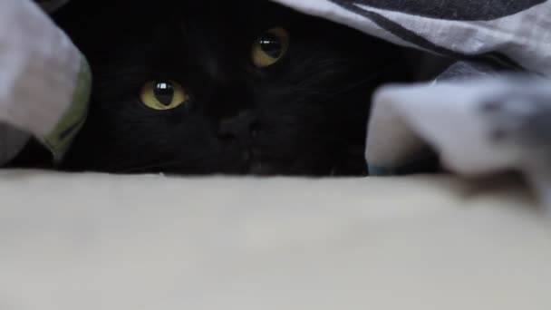 μαύρη γάτα μουνί γάτα σεξ xxx για κινητές συσκευές