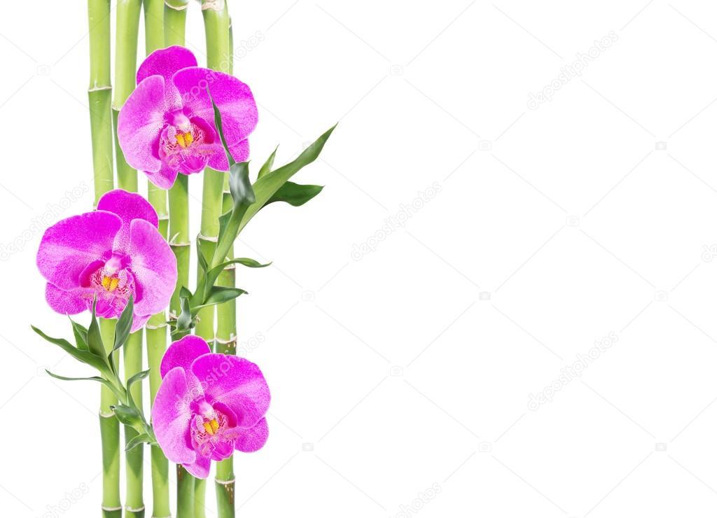 Imágenes: la flor de bambu | Bambú de la suerte y tres flor de la ...