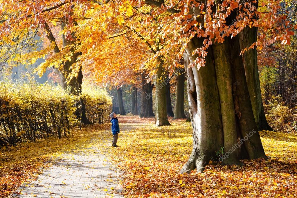 Bambino sotto l 39 albero nella sosta di autunno foto stock for Piani di fattoria sotto 2000 piedi quadrati