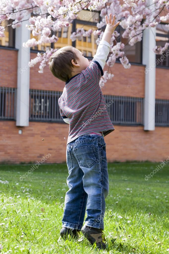 Child under cherry tree in spring