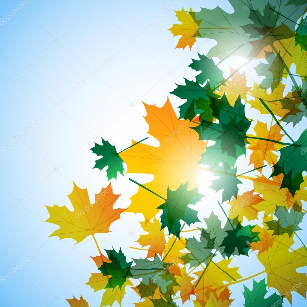 イラスト秋をモチーフに。カエデを葉します。ベクトルの背景 — ストック