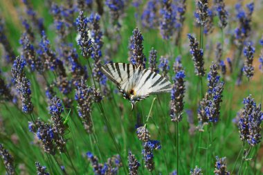Cutlery butterflies on lavender flowers