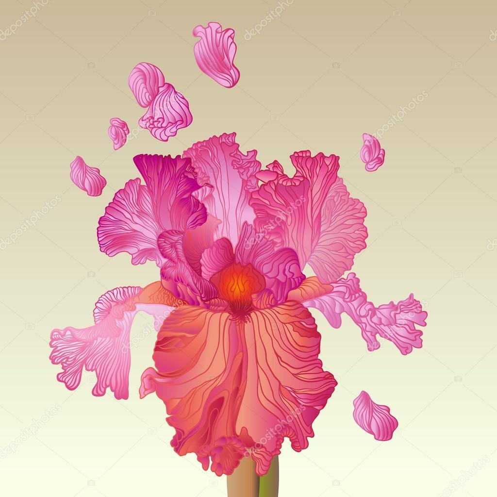 Pink iris flower stock vector tueris 70784417 pink iris flower stock vector izmirmasajfo