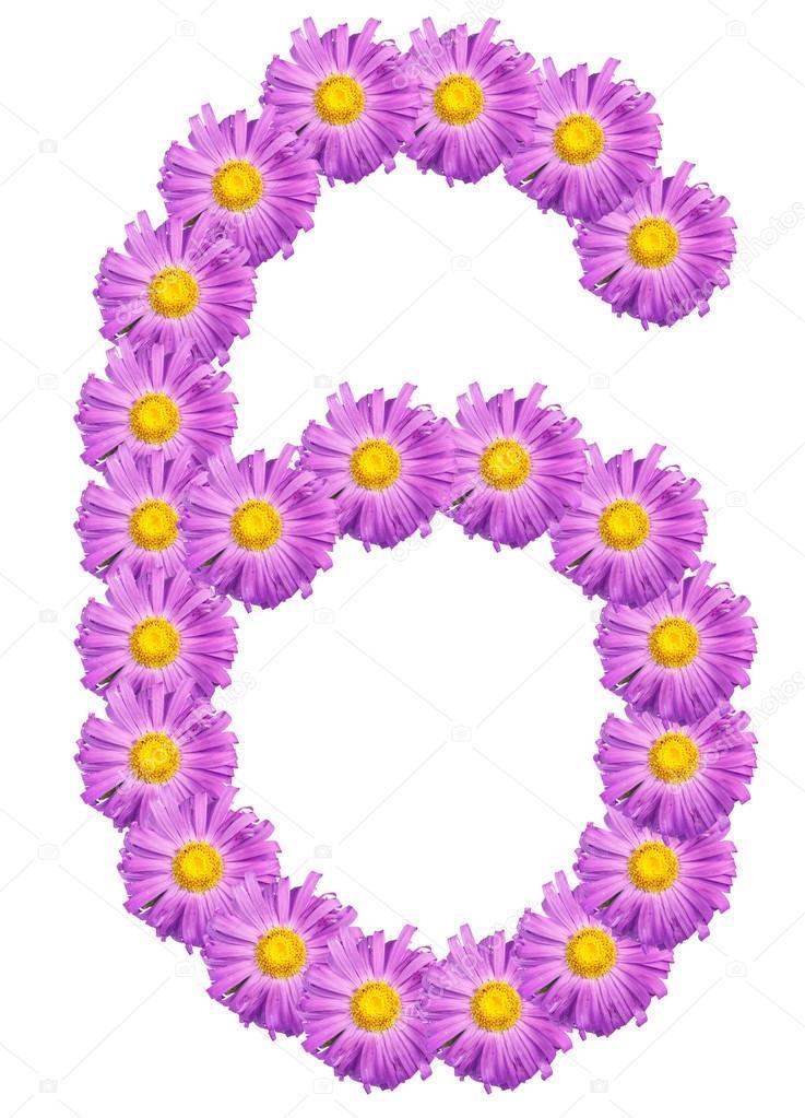 Nummer 6 bestehend aus Farben lila Astern. Isoliert auf weißem bac ...