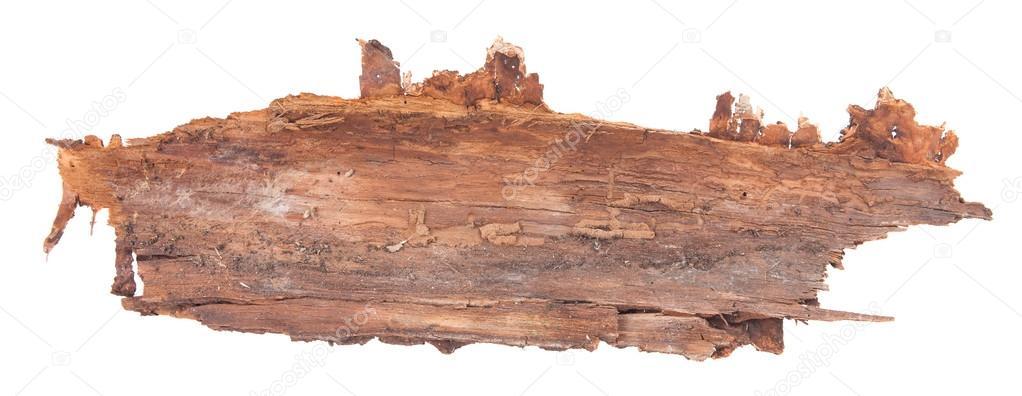 https://st2.depositphotos.com/2108197/10878/i/950/depositphotos_108788640-stock-photo-piece-of-tree-bark-isolated.jpg
