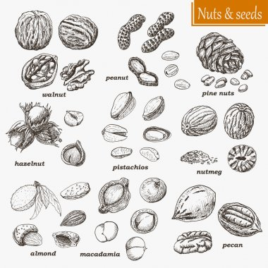 Collection of nuts and seeds