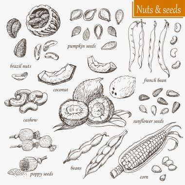 Collection of isolated nuts and seeds