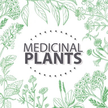 Vector background with medical herbs. Vector  illustration for your design clip art vector