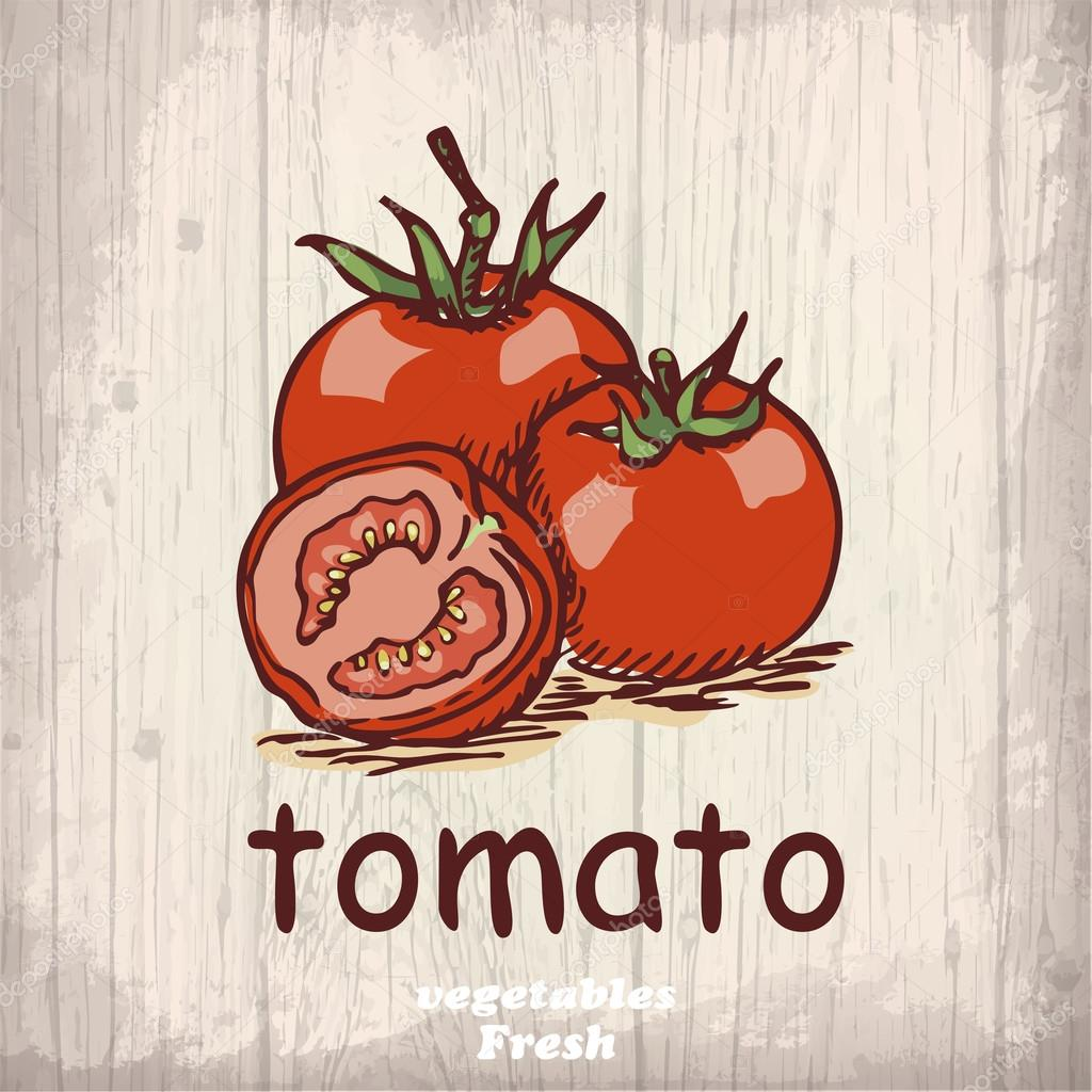 Fresh vegetables sketch background. Vintage hand drawing illustration of a tomato
