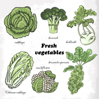 Set of cabbages - cauliflower, Chinese cabbage, broccoli, Brussels sprouts, kohlrabi