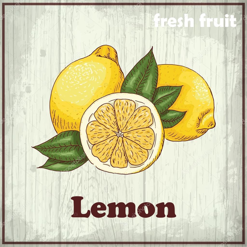 Fresh fruit sketch background. Vintage hand drawing illustration of a lemon