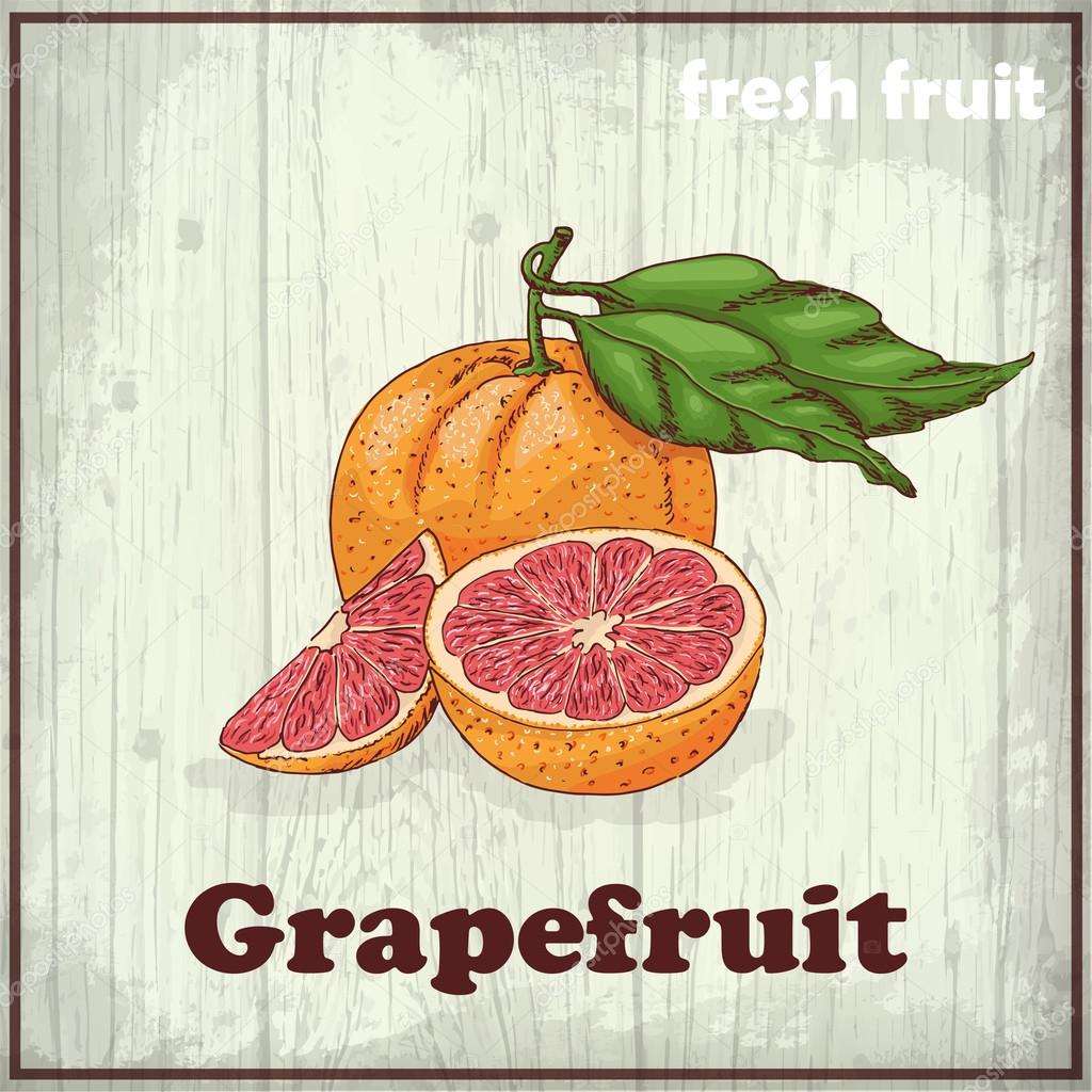 Fresh fruit sketch background. Vintage hand drawing illustration of grapefruit