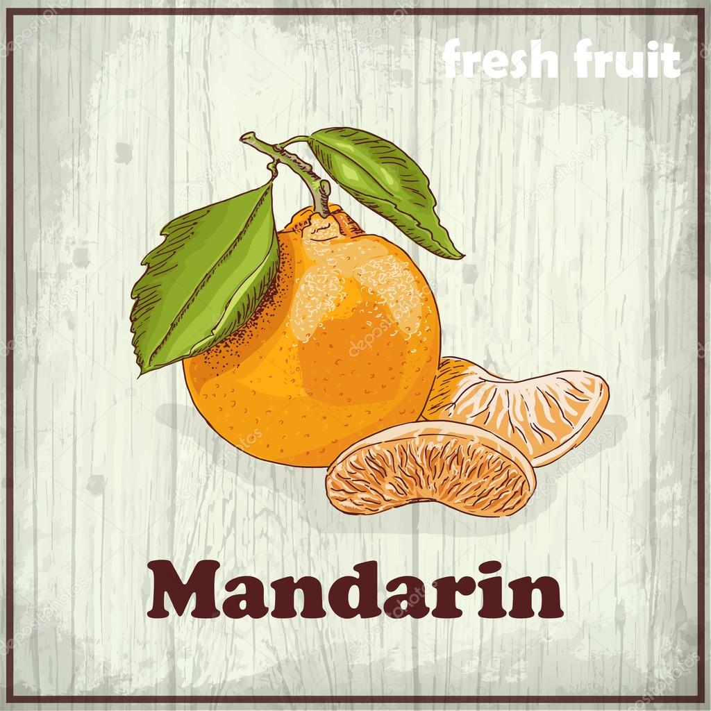 Fresh fruit sketch background. Vintage hand drawing illustration of Mandarin