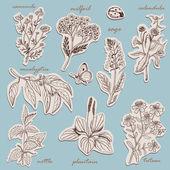 Gyógynövények gyűjtése a címkék vázlat stílusú