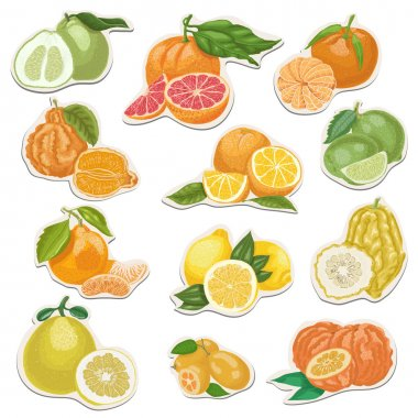 Citrus collection on tags