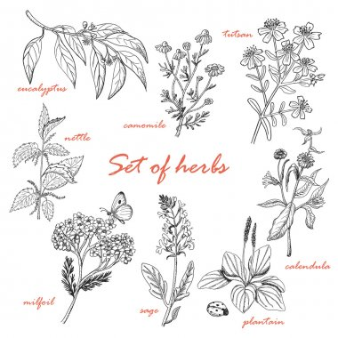 Set of isolated herbs in sketch style. Vector illustration for your design clip art vector
