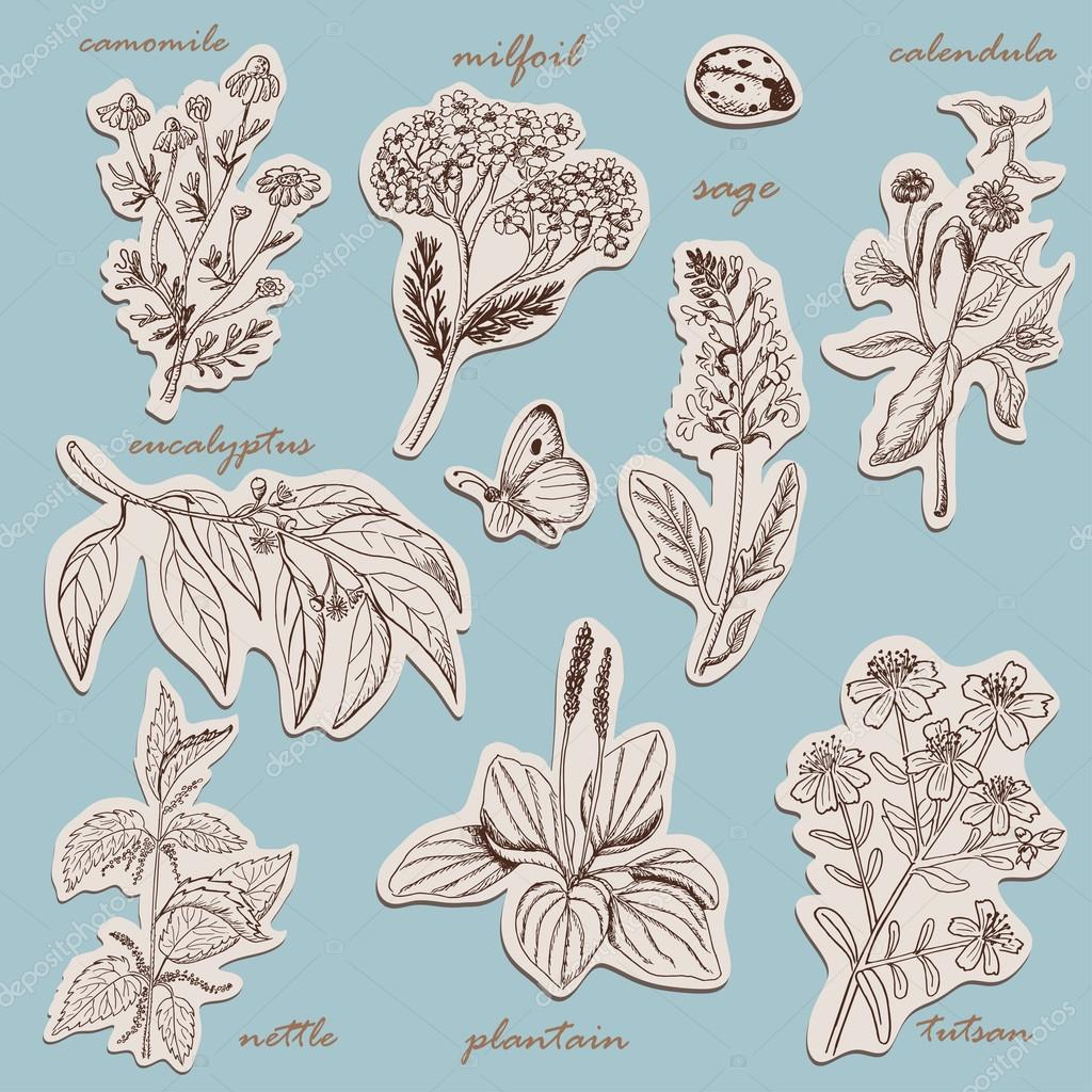 Herbs collection on tags in sketch style