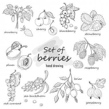Set of garden berries