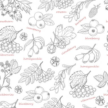 Seamless pattern with forest berries on white background