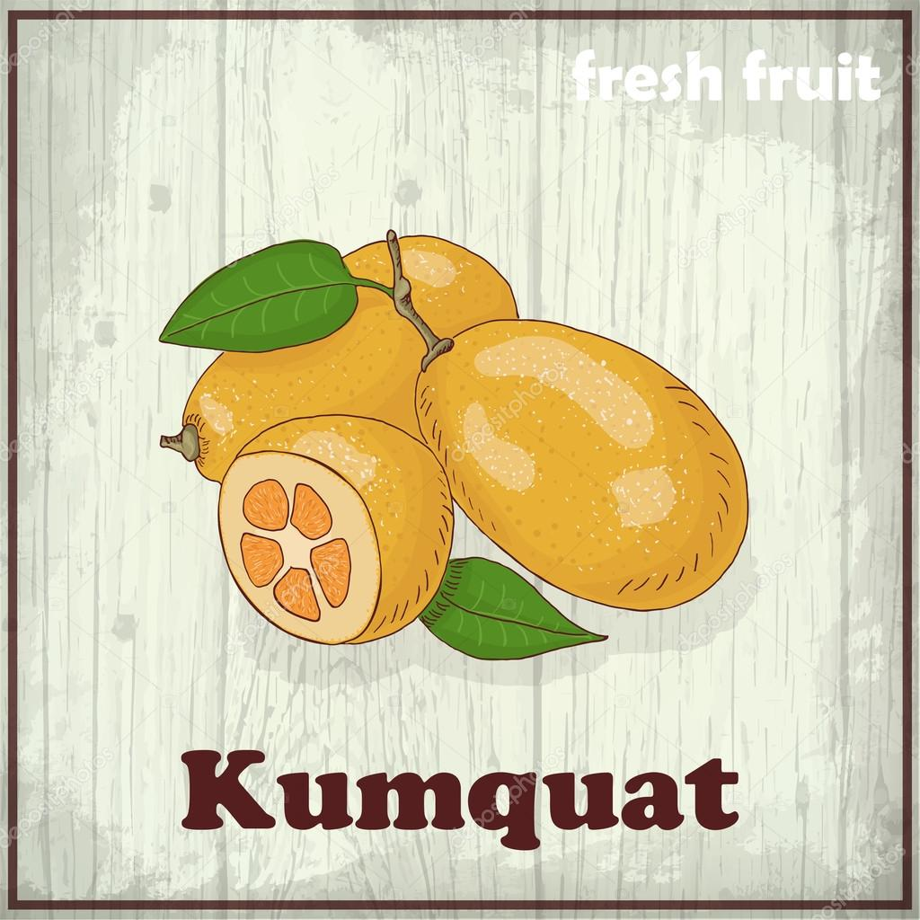 Fresh fruit sketch background. Hand drawing illustration of kumquat