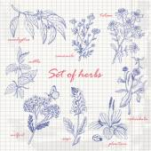 Set of isolated herbs in sketch style on paper