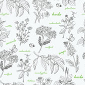 Vector seamless pattern with herbs on a white background