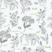 Vektor varrat nélküli mintát a gyógynövények egy fehér háttér