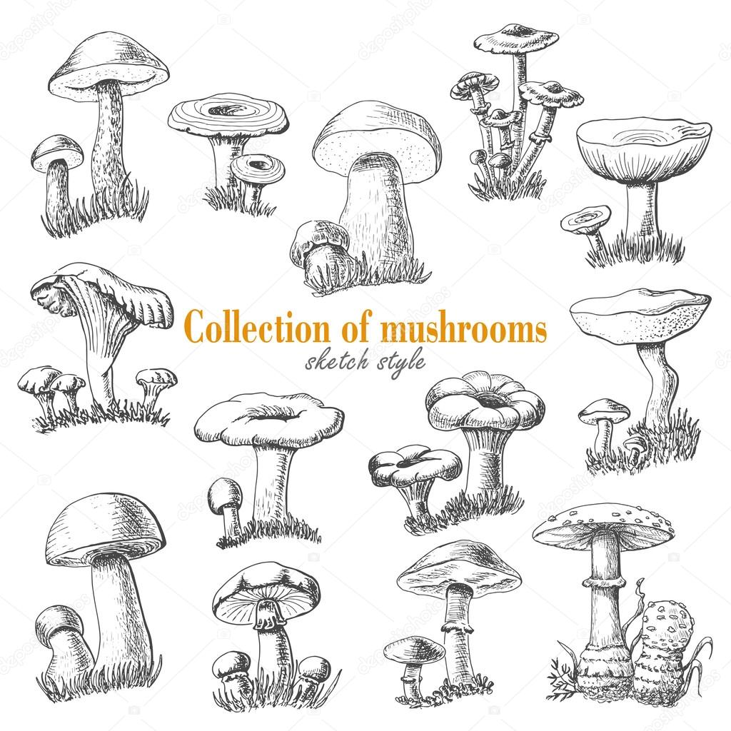 Collection of mushrooms in sketch style