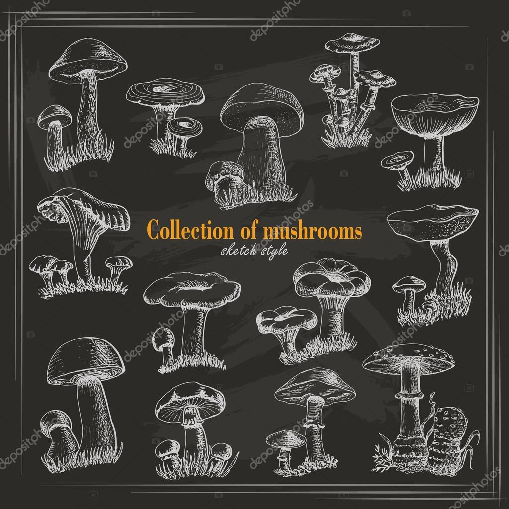 Collection of mushrooms in sketch style on a dark background