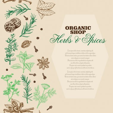 Vector background with spices and herbs. Vector  illustration for your design clip art vector