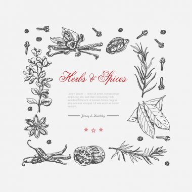 Vector frame of spices and herbs on a white background