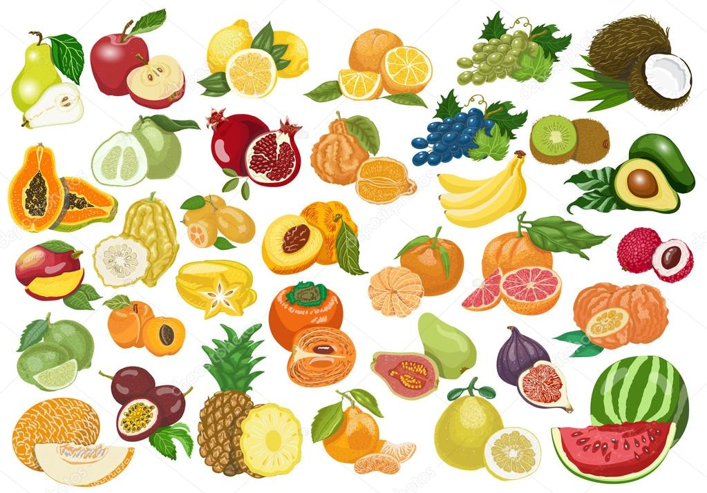 Big collection of isolated fruits on white background. Vector  illustration for your design clipart vector