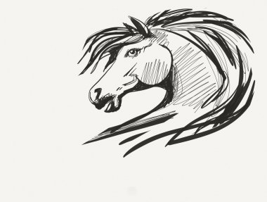 Horse head drawing