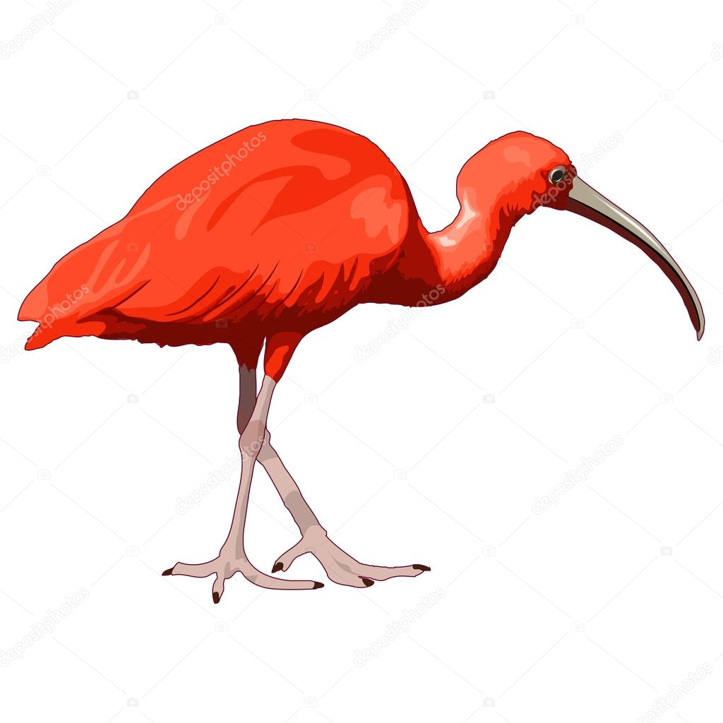 """scarlet ibis vs  """"the scarlet ibis"""" literary analysis the scarlet ibis is a very well – elaborated and splendid story written by james hurst the author has describes the."""