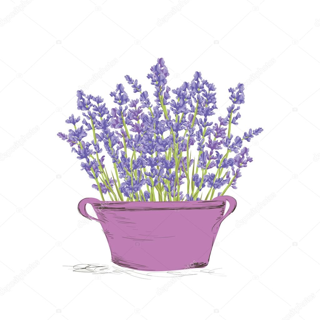 Seamless lavender pattern.
