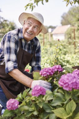 Senior man working with blooming flowers in garden stock vector