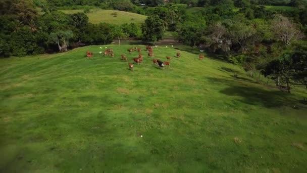 Letecký pohled na stádo krav a ovcí na zelené louce a zelené louce