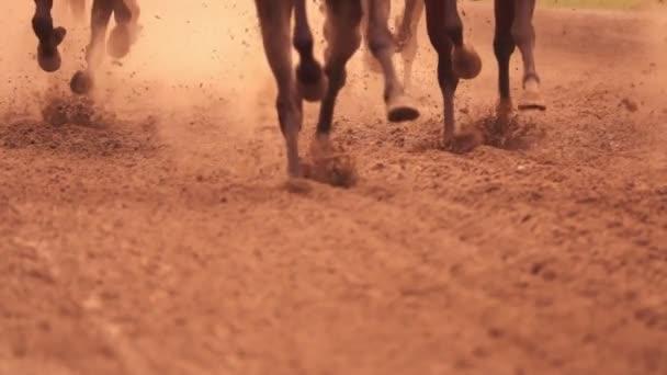 Horse Racing. Feet. Slow Motion