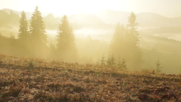 Žlutá mlha v zalesněných horách