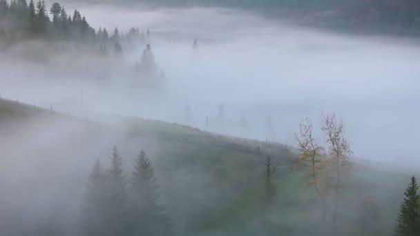 Mlha na horské pastviny