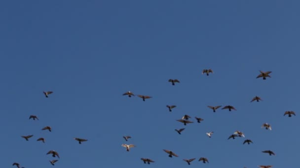 Flock of Birds in a Cloudless Sky