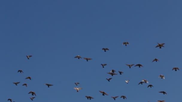 Hejno ptáků na bezmračné obloze